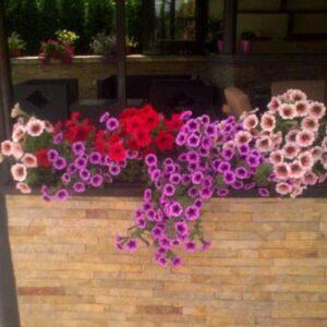darwin-garden-design-biodekoracija