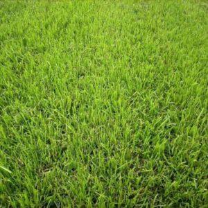 darwin-garden-design-organska-proizvodnja-tepih-travnjaka