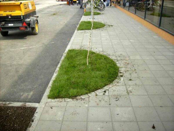 darwin-garden-design-projektovanje-zelenih-povrsina-idejna-resenja
