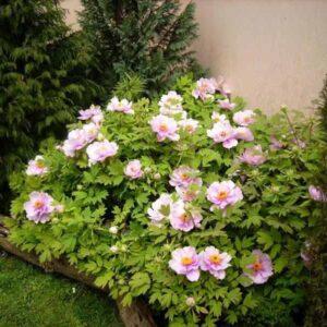darwin-garden-design-sadnja-sadnica-1