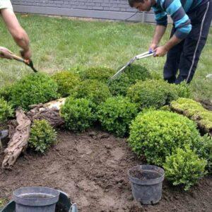 darwin-garden-design-uredenje-i-odrzavanje-zelenih-povrsina